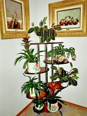 Растения и цветы в доме