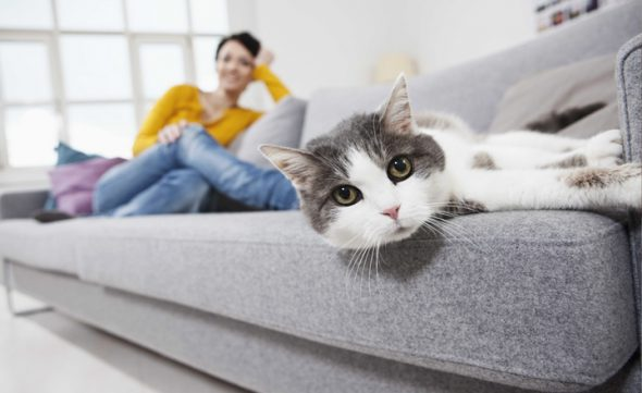 чистка дивана от запаха