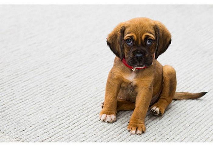 избавиться от запаха мочи собаки