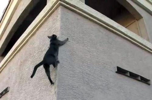 Кошка использует свои когти