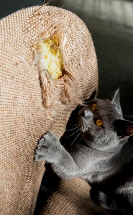 Разные кошки предпочитают разные поверхности