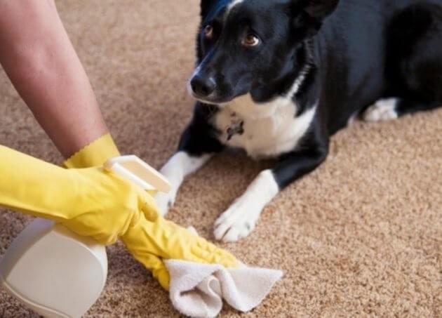 средство от запаха мочи собаки