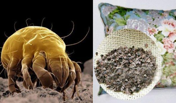 В подушке не заводятся пылевые клещи